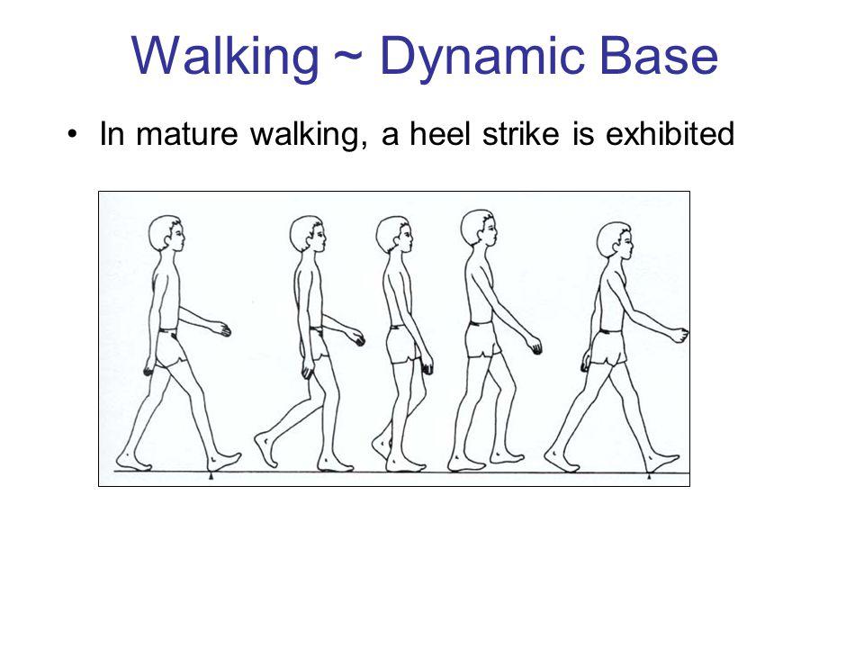 Walking ~ Dynamic Base In mature walking, a heel strike is exhibited