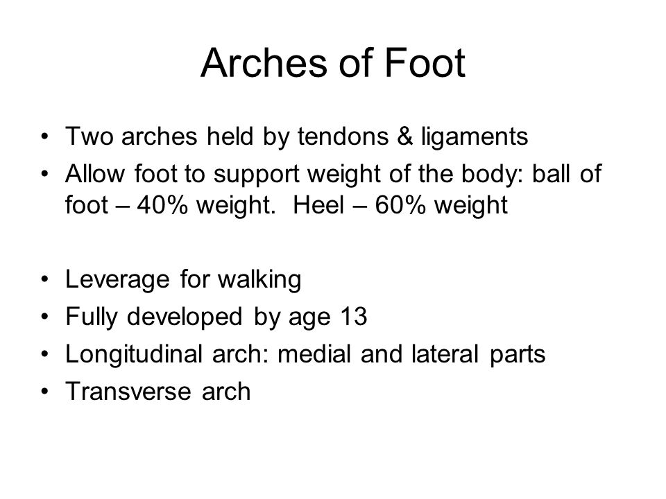 Arches of Foot Two arches held by tendons & ligaments