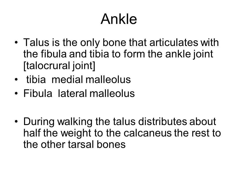 Ankle Talus is the only bone that articulates with the fibula and tibia to form the ankle joint [talocrural joint]