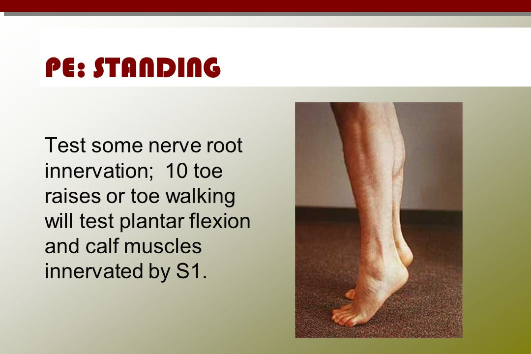 PE: STANDING Test some nerve root innervation; 10 toe raises or toe walking will test plantar flexion and calf muscles innervated by S1.
