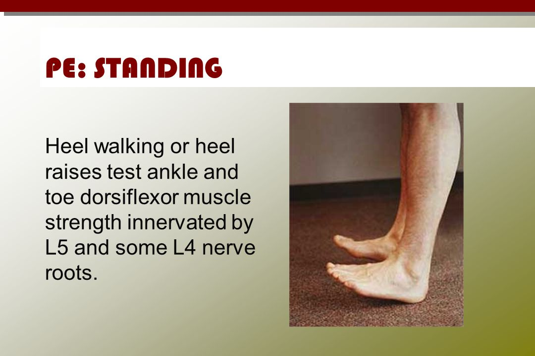 PE: STANDING Heel walking or heel raises test ankle and toe dorsiflexor muscle strength innervated by L5 and some L4 nerve roots.