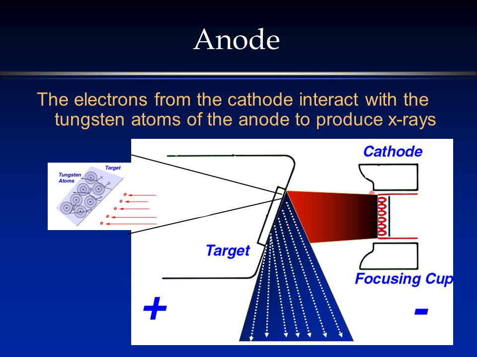 Anode The electrons from the cathode interact with the tungsten atoms of the anode to produce x-rays.
