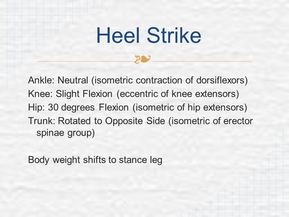Heel Strike Ankle: Neutral (isometric contraction of dorsiflexors)