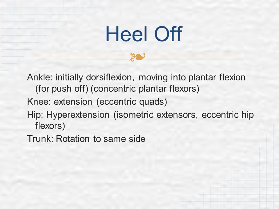 Heel Off Ankle: initially dorsiflexion, moving into plantar flexion (for push off) (concentric plantar flexors)