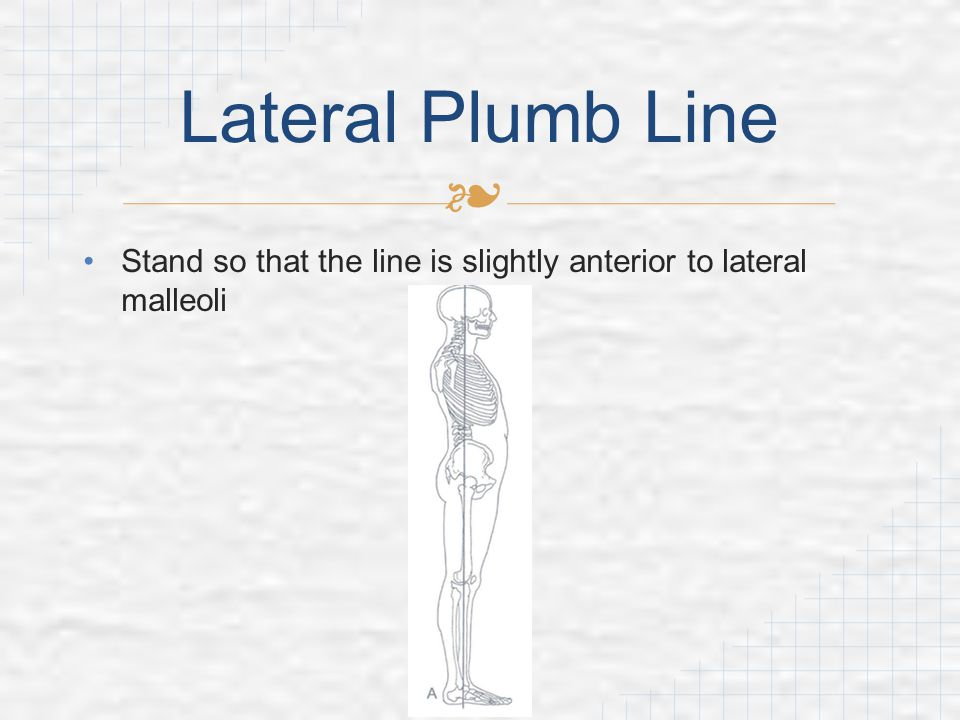 Lateral Plumb Line Stand so that the line is slightly anterior to lateral malleoli