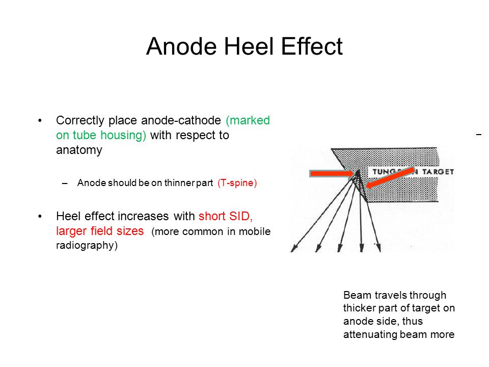 Anode Heel Effect Correctly place anode-cathode (marked on tube housing) with respect to anatomy. Anode should be on thinner part (T-spine)