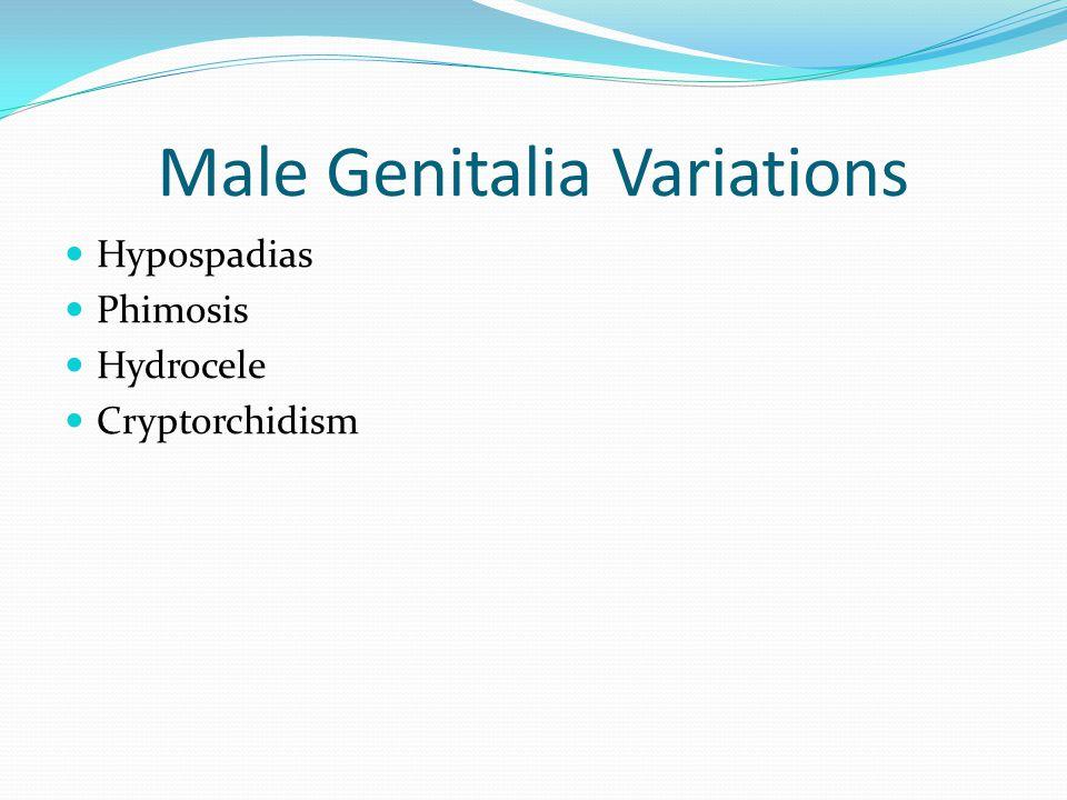 Male Genitalia Variations