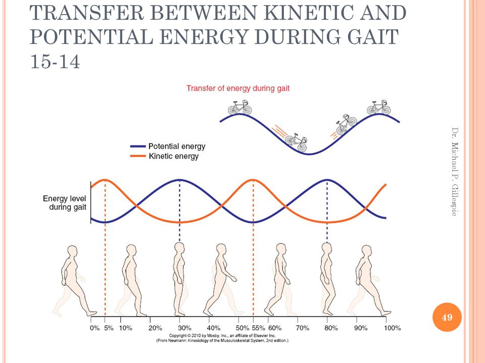 TRANSFER BETWEEN KINETIC AND POTENTIAL ENERGY DURING GAIT 15-14