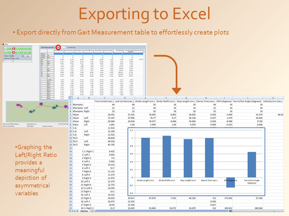 Exporting to Excel Export directly from Gait Measurement table to effortlessly create plots.