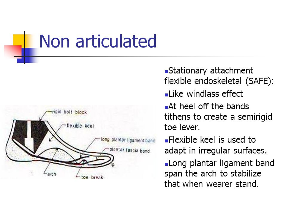 Non articulated Stationary attachment flexible endoskeletal (SAFE):