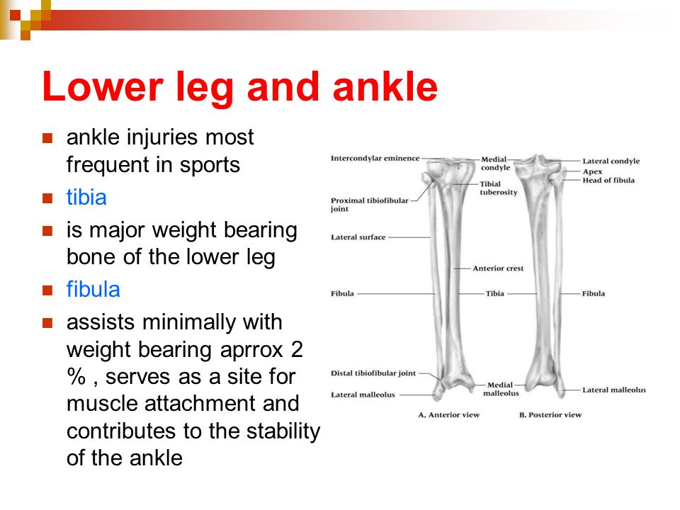 Lower leg and ankle ankle injuries most frequent in sports tibia