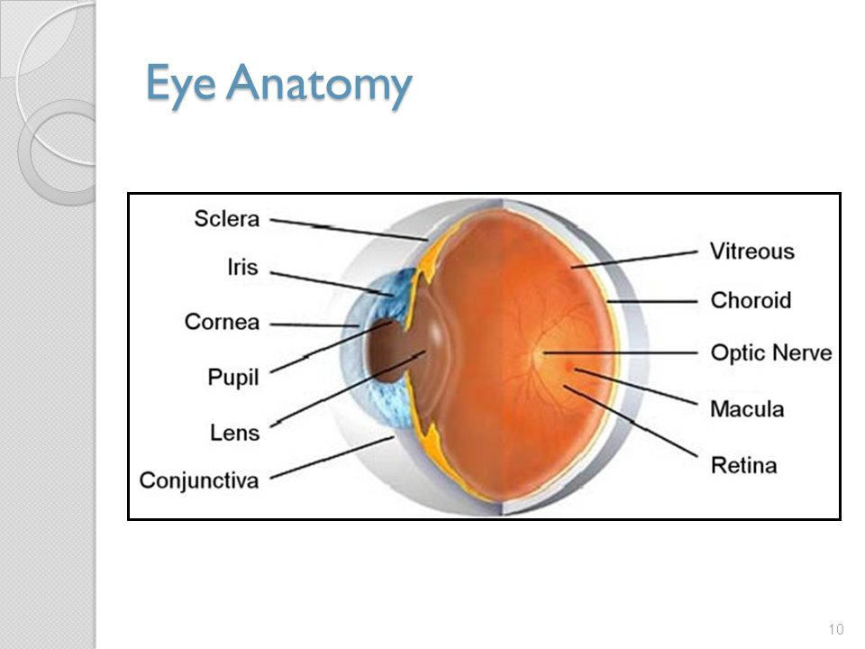 Eye Anatomy When conducting an external inspection of the eye you want to examine the: