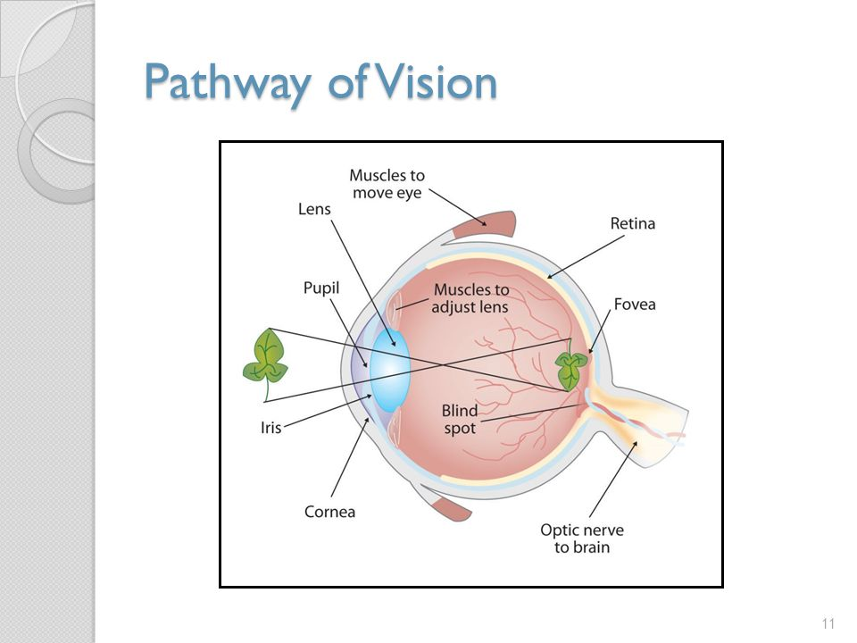 Pathway of Vision