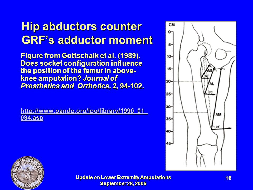 Hip abductors counter GRF's adductor moment