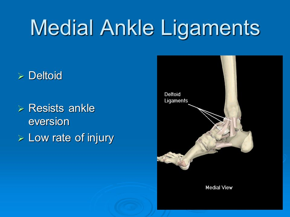 Medial Ankle Ligaments