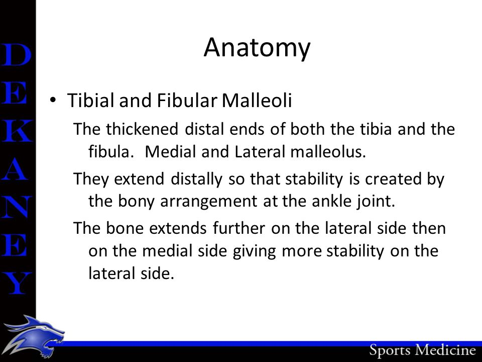 Anatomy Tibial and Fibular Malleoli