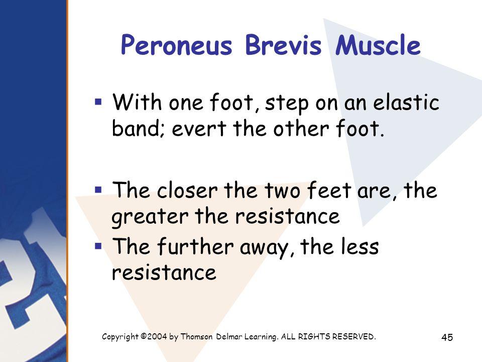 Peroneus Brevis Muscle