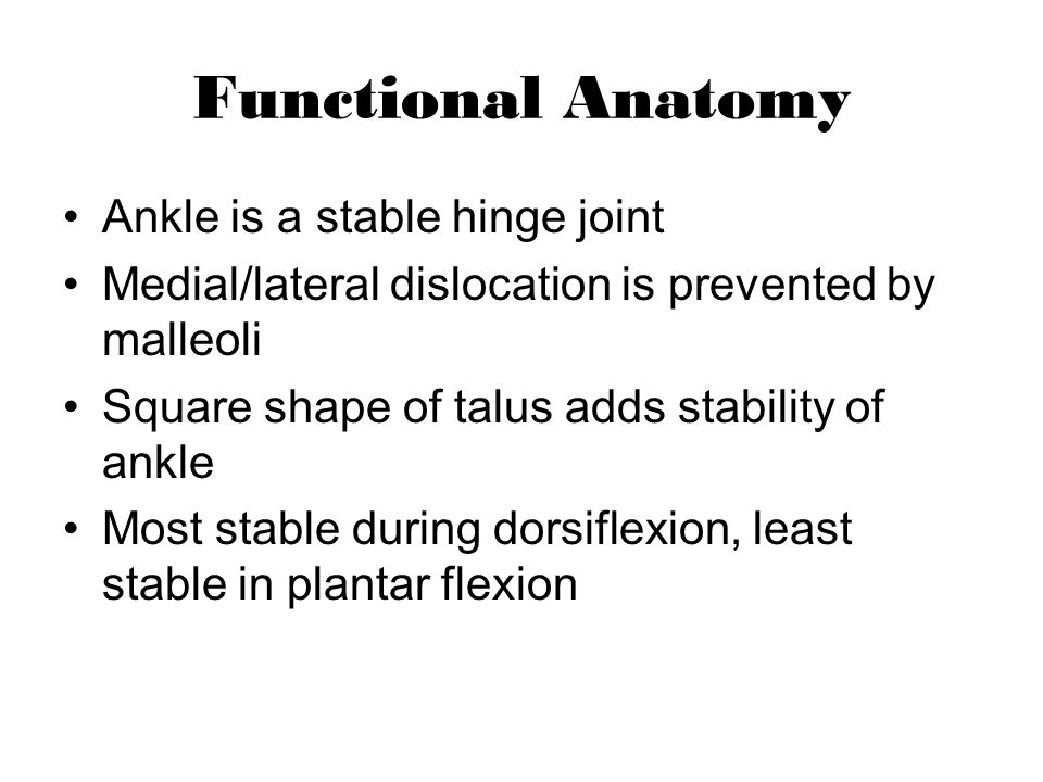 Functional Anatomy Ankle is a stable hinge joint