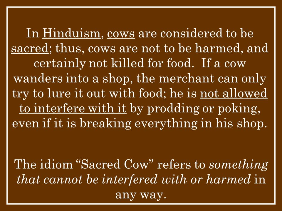 In Hinduism, cows are considered to be sacred; thus, cows are not to be harmed, and certainly not killed for food. If a cow wanders into a shop, the merchant can only try to lure it out with food; he is not allowed to interfere with it by prodding or poking, even if it is breaking everything in his shop.