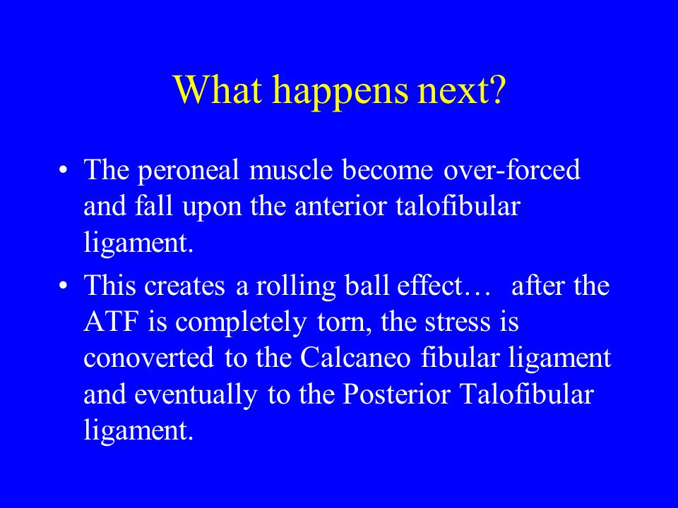 What happens next The peroneal muscle become over-forced and fall upon the anterior talofibular ligament.
