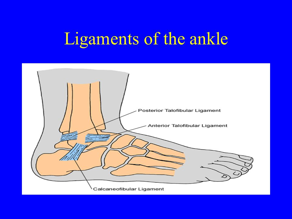 Ligaments of the ankle