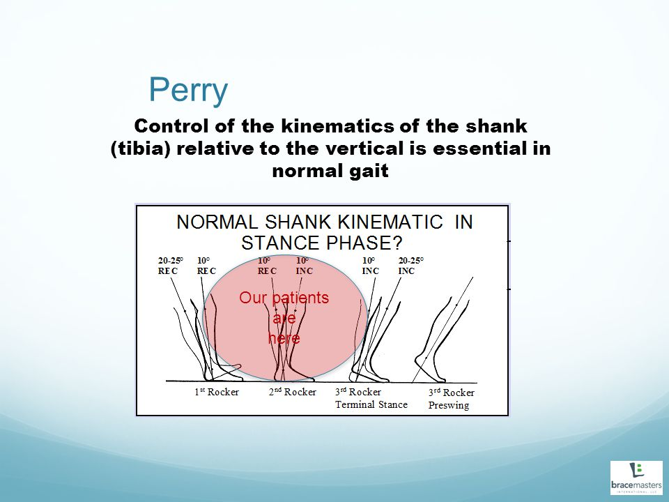 Perry Control of the kinematics of the shank (tibia) relative to the vertical is essential in normal gait.
