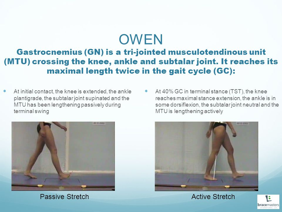 OWEN Gastrocnemius (GN) is a tri-jointed musculotendinous unit (MTU) crossing the knee, ankle and subtalar joint. It reaches its maximal length twice in the gait cycle (GC):