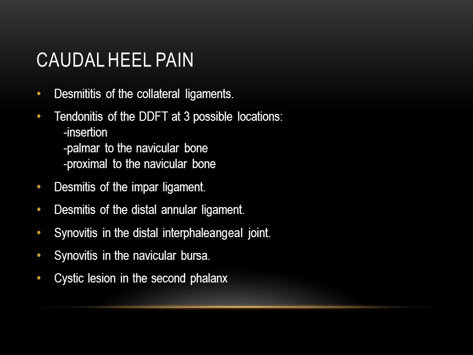Caudal Heel Pain Desmititis of the collateral ligaments.