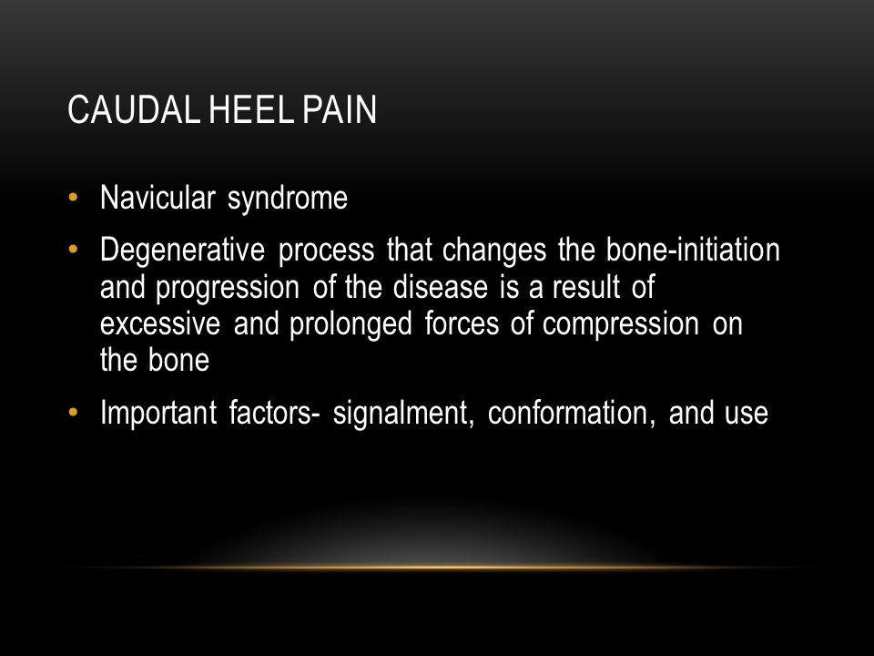 Caudal heel pain Navicular syndrome