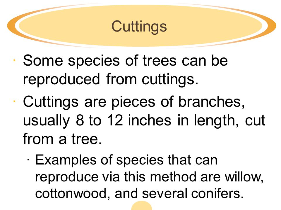 Some species of trees can be reproduced from cuttings.
