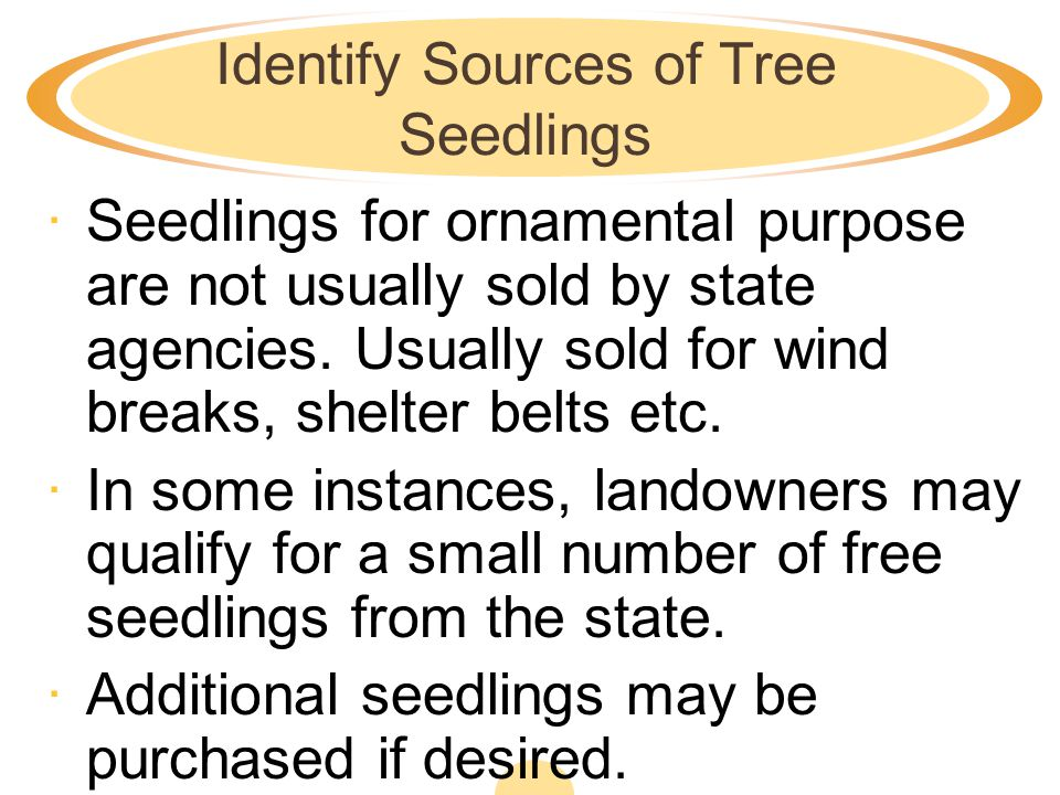 Identify Sources of Tree Seedlings