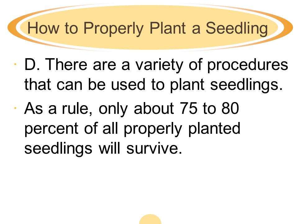 How to Properly Plant a Seedling