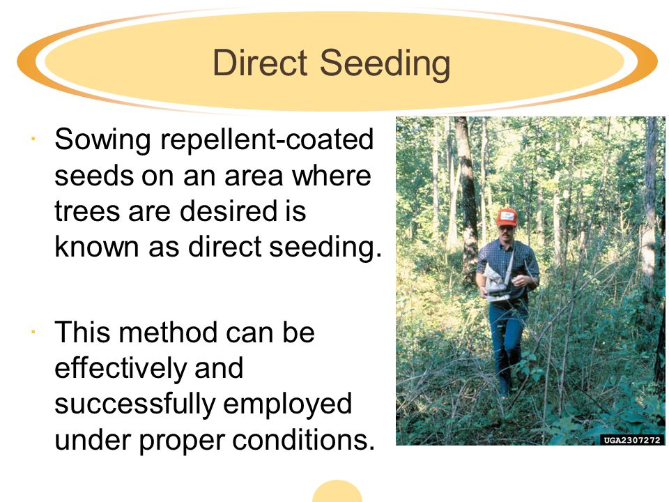 Direct Seeding Sowing repellent-coated seeds on an area where trees are desired is known as direct seeding.