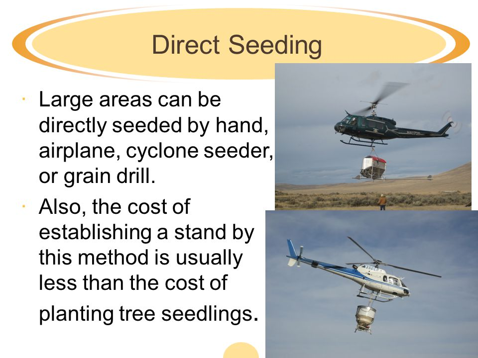 Direct Seeding Large areas can be directly seeded by hand, airplane, cyclone seeder, or grain drill.