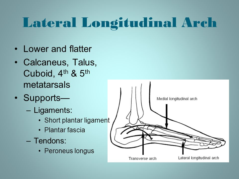 Lateral Longitudinal Arch