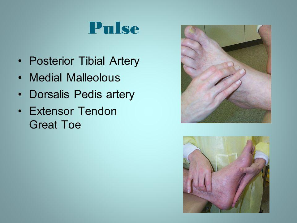 Pulse Posterior Tibial Artery Medial Malleolous Dorsalis Pedis artery