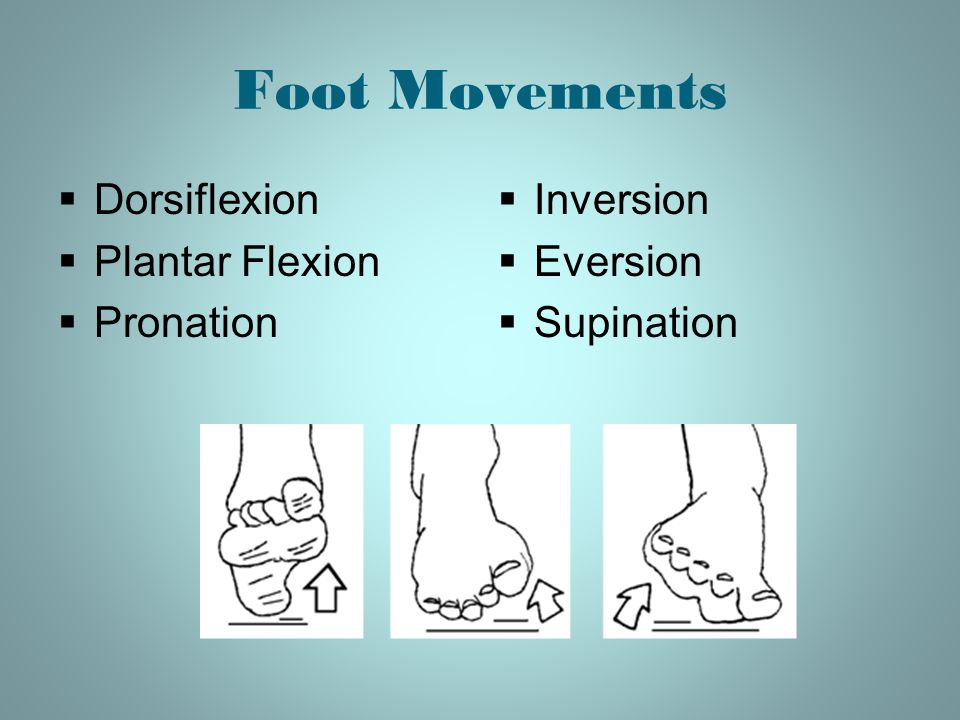 Foot Movements Dorsiflexion Plantar Flexion Pronation Inversion