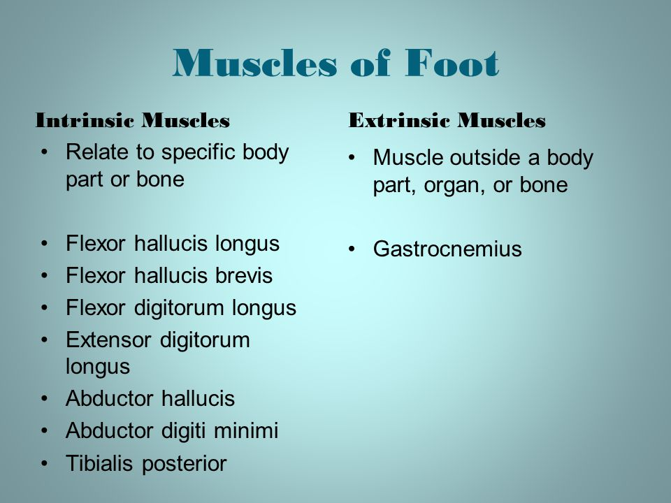 Muscles of Foot Intrinsic Muscles Extrinsic Muscles