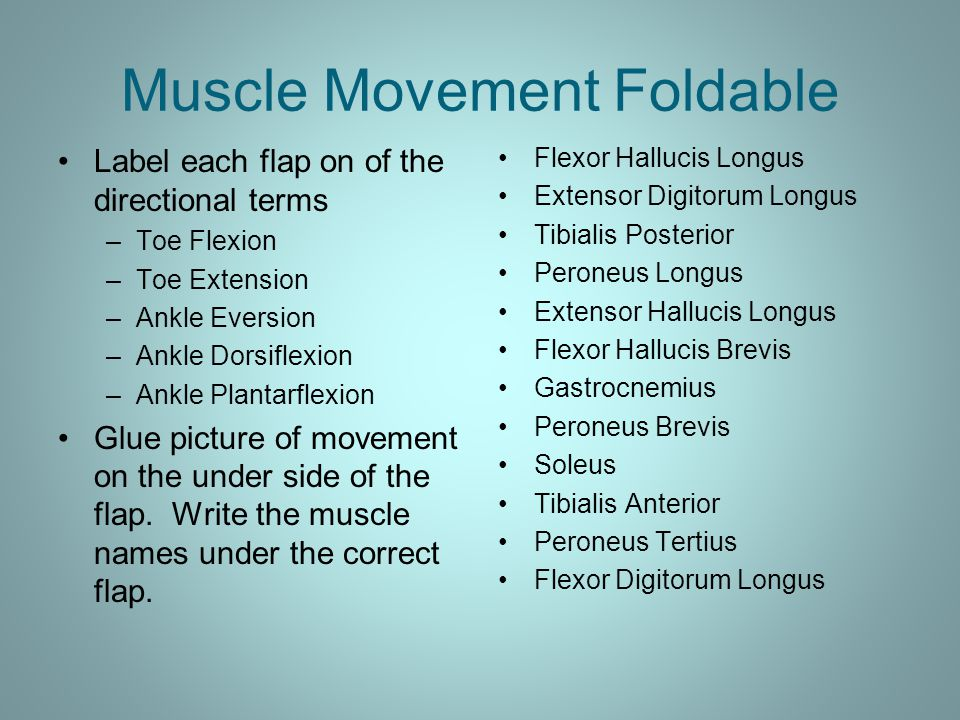 Muscle Movement Foldable