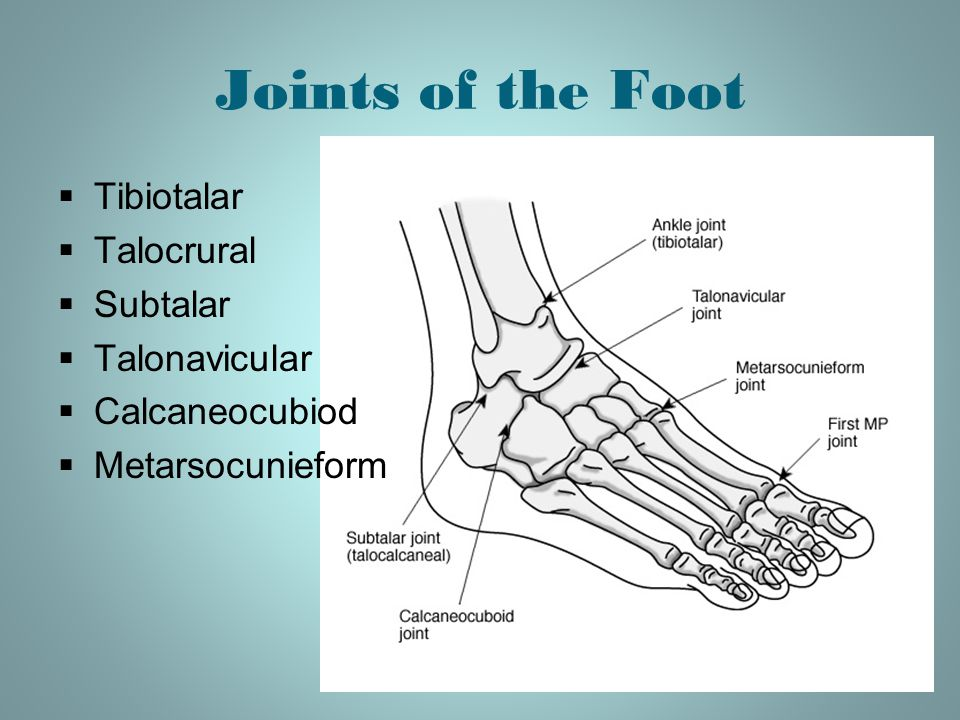 Anatomy of foot joints 962213 - follow4more.info