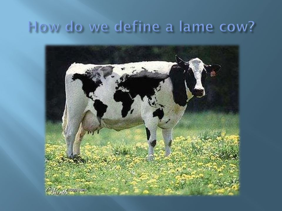 How do we define a lame cow