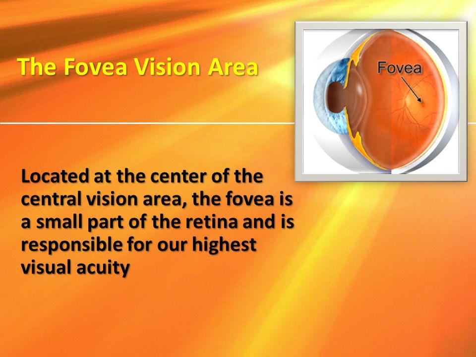 The Fovea Vision Area