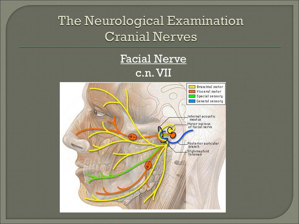 The Neurological Examination Cranial Nerves