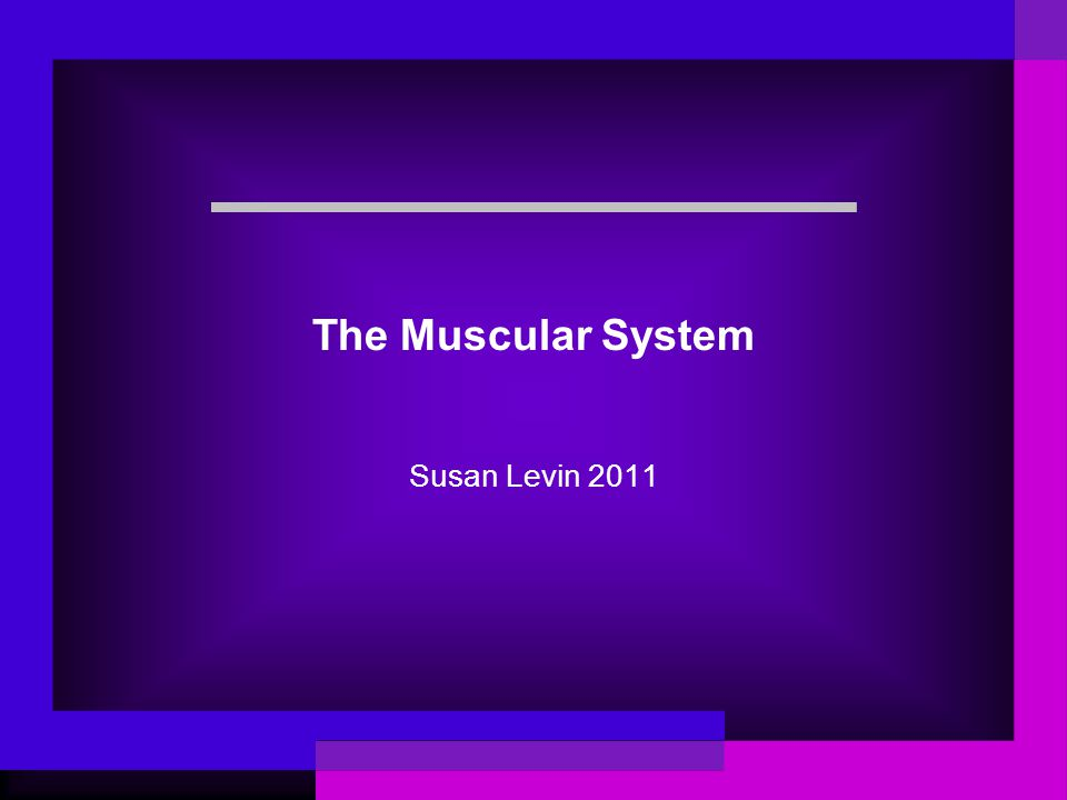 The Muscular System Susan Levin 2011