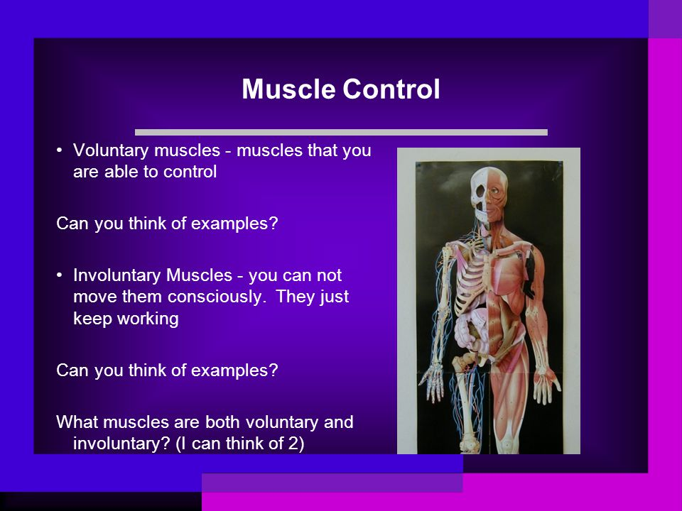 Muscle Control Voluntary muscles - muscles that you are able to control. Can you think of examples