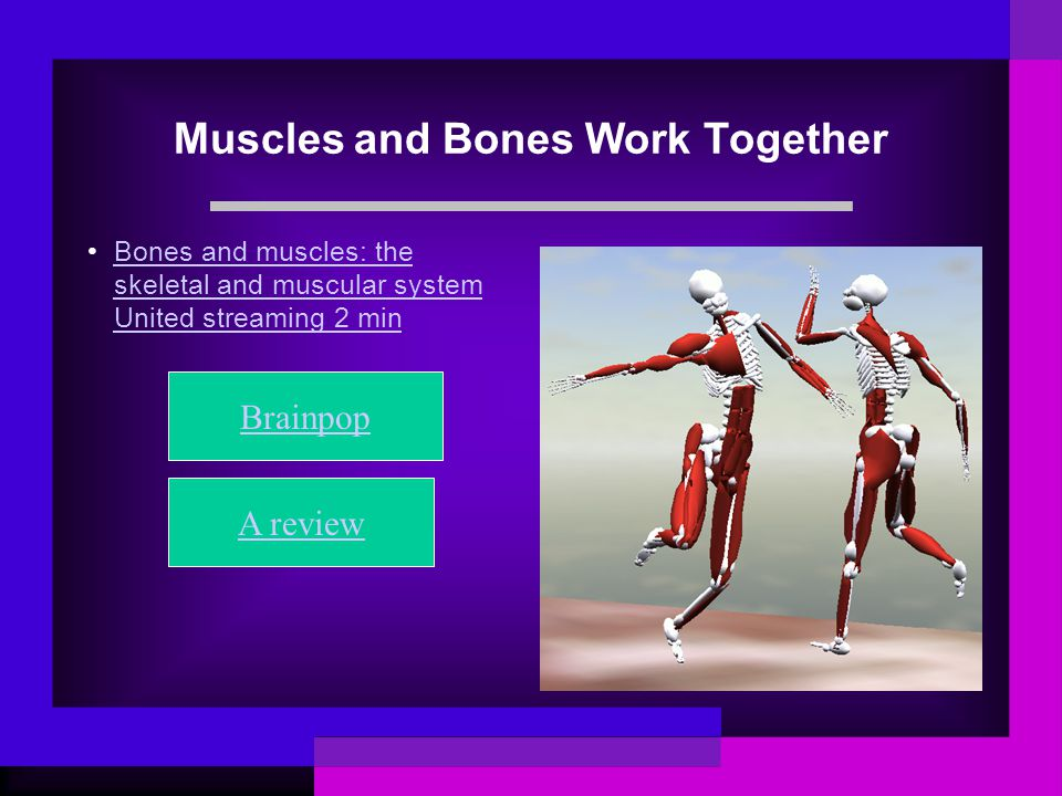 essay on bones and muscles Free sample essay on human anatomy and physiology: tracing a anatomy and physiology: tracing a nerve impulse muscles are pulling on which bones.