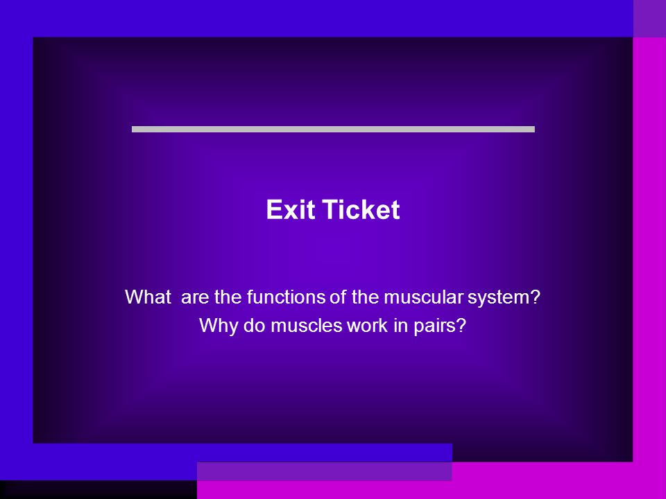 Exit Ticket What are the functions of the muscular system