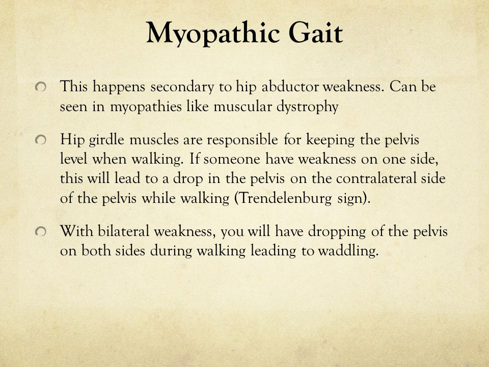 Myopathic Gait This happens secondary to hip abductor weakness. Can be seen in myopathies like muscular dystrophy.
