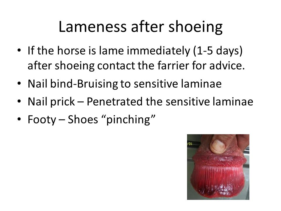 Lameness after shoeing