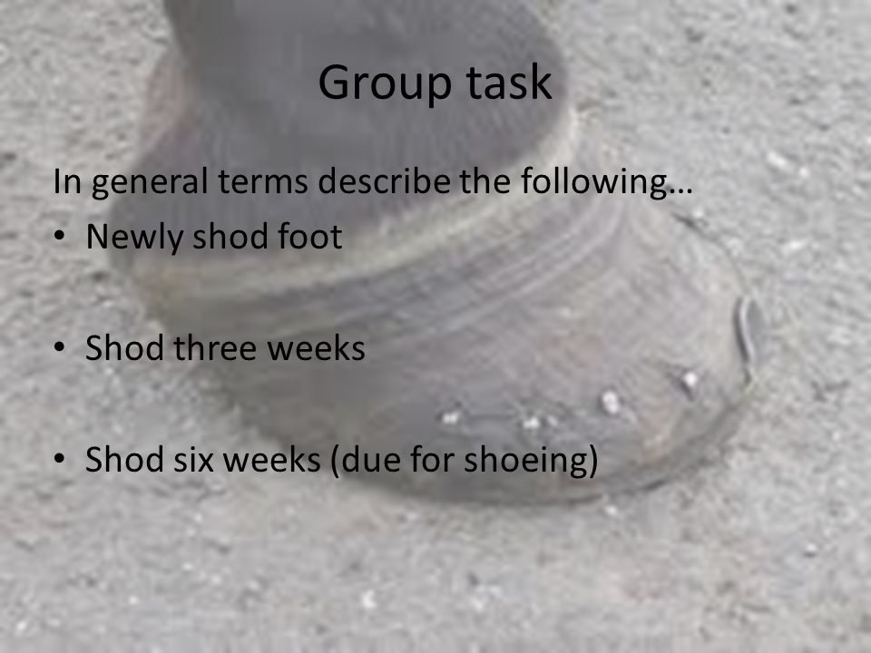 Group task In general terms describe the following… Newly shod foot